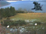 Nessie On The Net The Official And Ultimate Nessie Loch Ness